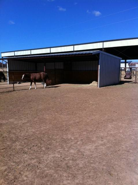 Younger Stables, Marine Creek Stables LLC - Younger Stables