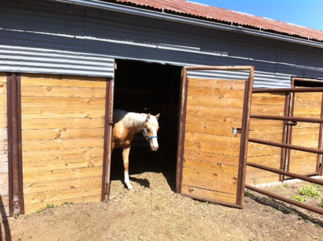 Younger Stables, Marine Creek Stables LLC - Younger Stables 809
